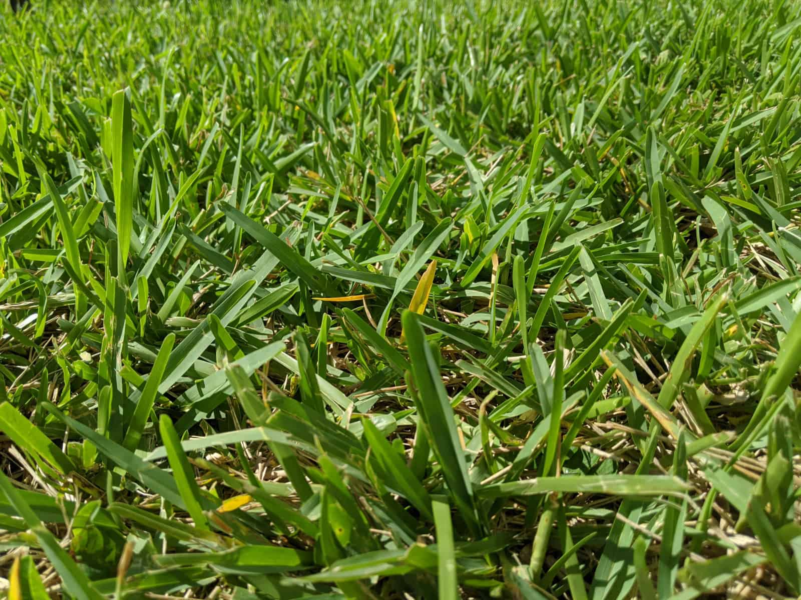 Is There a Difference Between Floratam and St. Augustine Grass?
