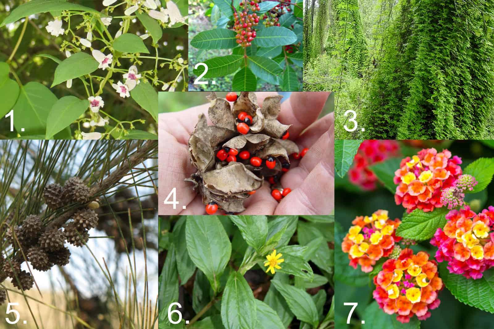 Florida Invasive Plants