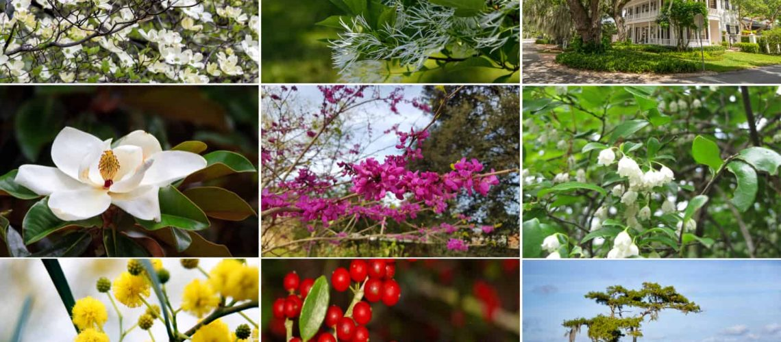 10 Native Florida Trees to Plant in Your Garden