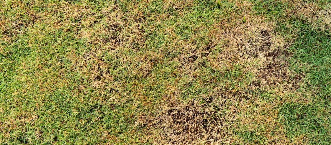 3 Common Lawn Pests and How to Eliminate Them