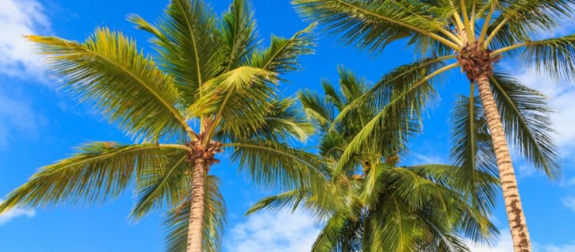 Common-Palm-Tree-Problems-and-Their-Solutions-1024x520