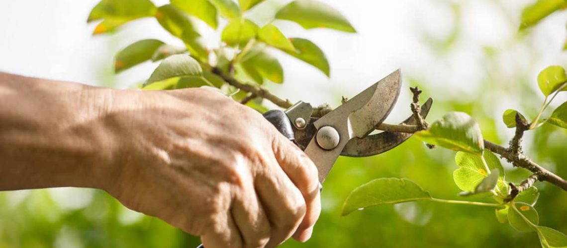 Now-Is-a-Great-Time-for-Pruning-1170x520