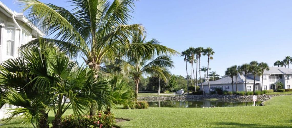 Palm-Trees-To-Match-Your-Florida-Landscape-1024x520