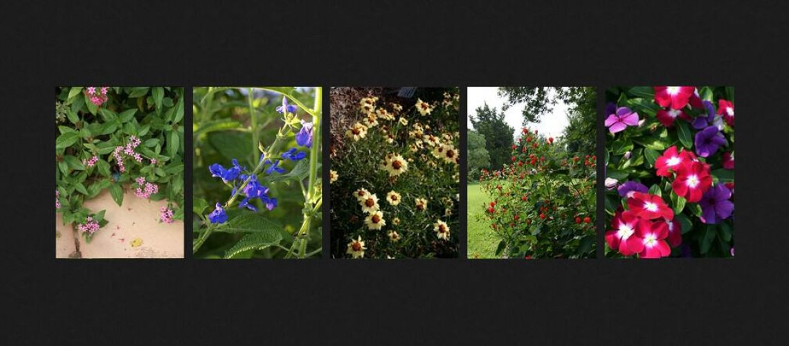 South-Florida-Flowers-to-Make-Your-Garden-Pop.1