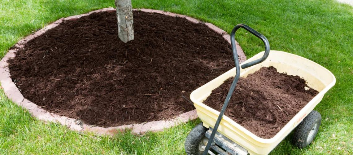 Tips And Tricks For Using Mulch Around Trees
