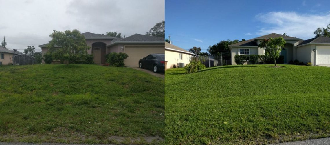 before-and-after-the-difference-a-year-of-professional-care-can-make-1170x520